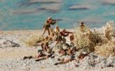 desert landscape 8-19-11 146a