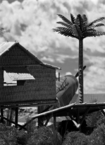 Tropical Airfield_Japanese_055